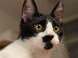 Pogled mačka-intelektualca