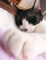 Naša mala ušata spavalica