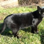 Mačak-lovac sa keja
