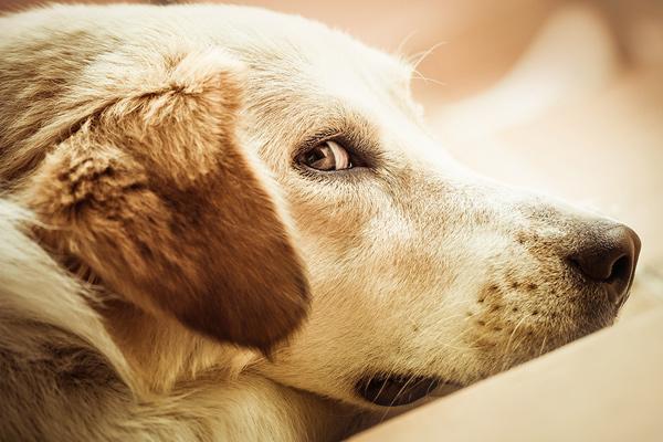 Najbolji pas na svetu - Lajka
