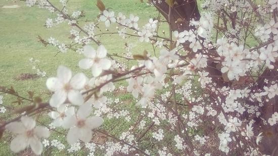 Još jedno proleće