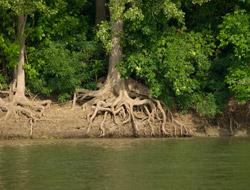 Bogato korenje drveća