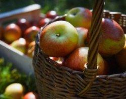 Jabuke za Cicibellu