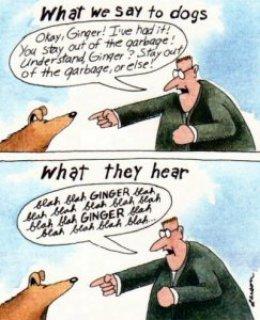 Šta psi čuju