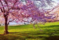 Proleće se budi
